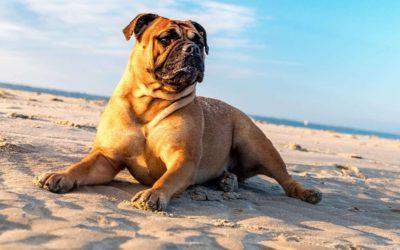 Com cuidar de la teva mascota a l'estiu